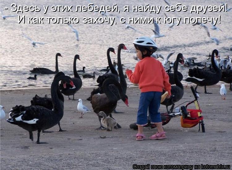 Котоматрица: - Здесь у этих лебедей, я найду себе друзей! И как только захочу, с ними к югу полечу!