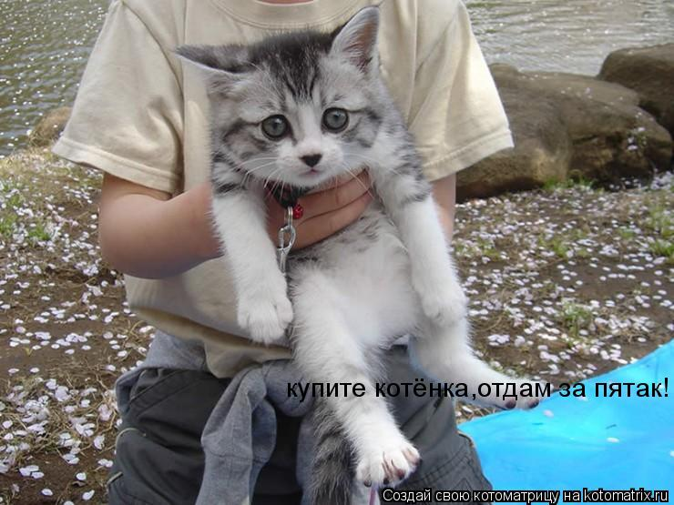 Котоматрица: купите котёнка,отдам за пятак!