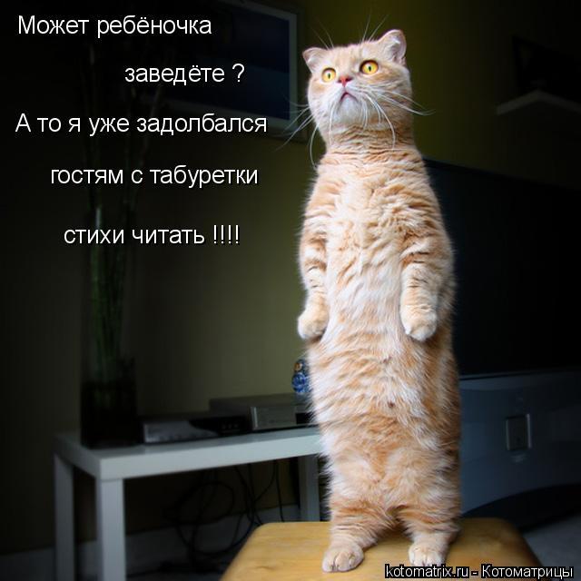 http://kotomatrix.ru/images/lolz/2009/02/01/news.txtOY.jpg