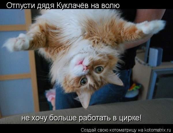 Котоматрица: Отпусти дядя Куклачёв на волю не хочу больше работать в цирке!