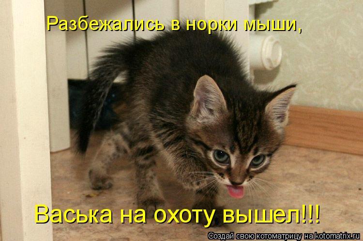 Котоматрица: Васька на охоту вышел!!! Разбежались в норки мыши,