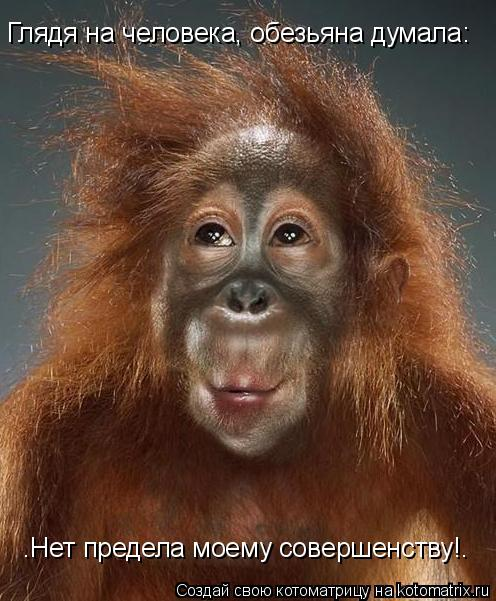 "Котоматрица: Глядя на человека, обезьяна думала:   ""Нет предела моему совершенству!"""