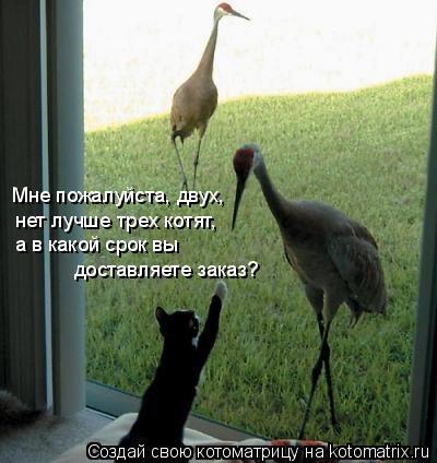 Котоматрица: Мне пожалуйста, двух,  нет лучше трех котят, а в какой срок вы  доставляете заказ?