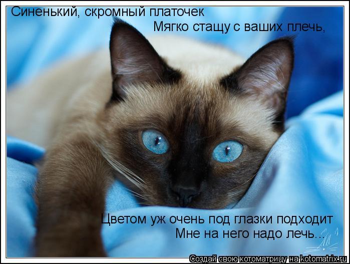 Кошки сиамские раскраски