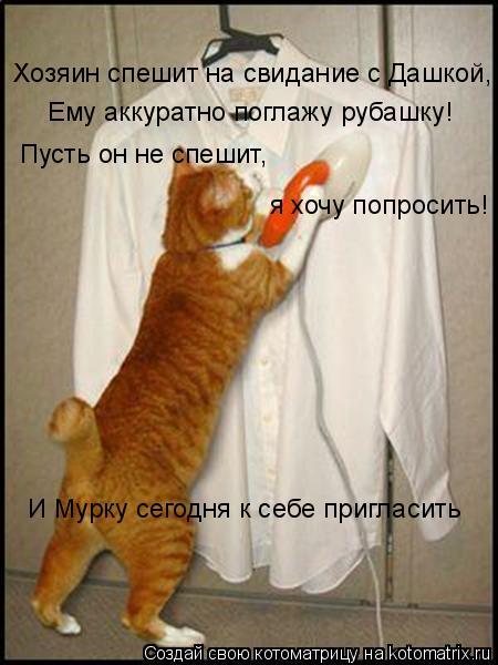 Котоматрица: Хозяин спешит на свидание с Дашкой, Ему аккуратно поглажу рубашку! Пусть он не спешит, я хочу попросить! И Мурку сегодня к себе пригласить