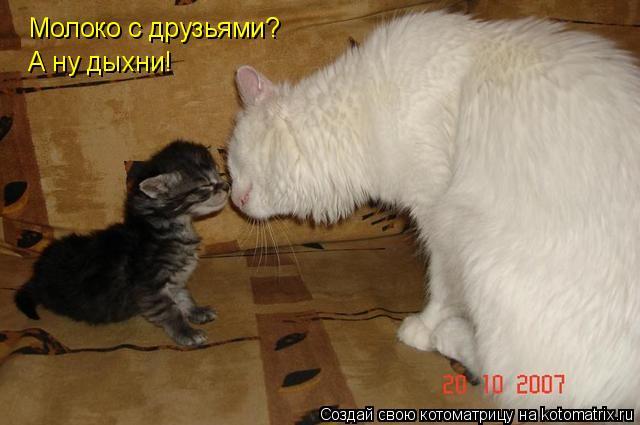Котоматрица: Молоко с друзьями? А ну дыхни!