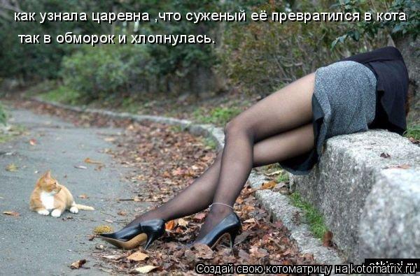 Котоматрица: как узнала царевна ,что суженый её превратился в кота так в обморок и хлопнулась.