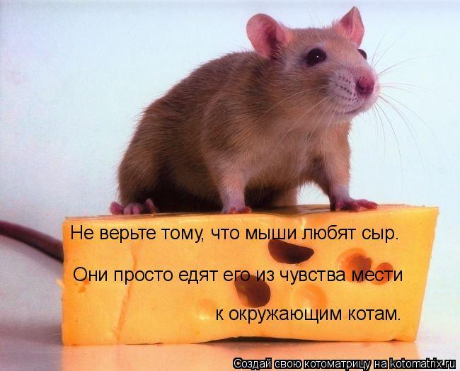Котоматрица: Не верьте тому, что мыши любят сыр.   Они просто едят его из чувства мести  к окружающим котам.