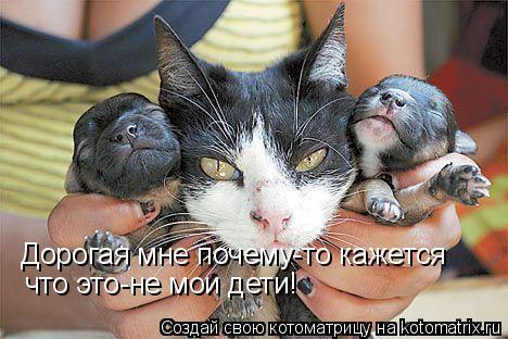 Котоматрица: Дорогая мне почему-то кажется что это-не мои дети!