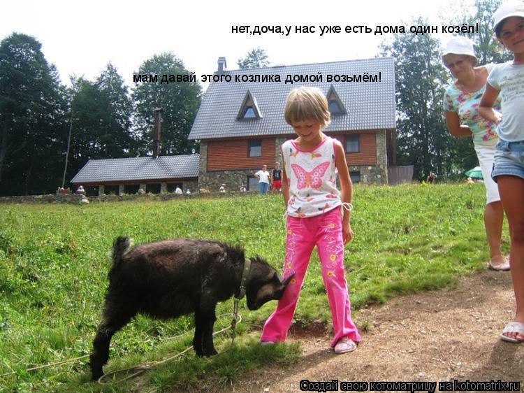 Котоматрица: мам давай этого козлика домой возьмём! нет,доча,у нас уже есть дома один козёл!