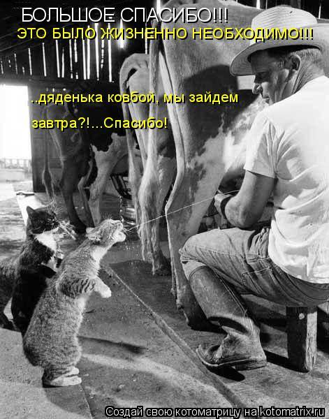 Котоматрица: БОЛЬШОЕ СПАСИБО!!! ЭТО БЫЛО ЖИЗНЕННО НЕОБХОДИМО!!! ..дяденька ковбой, мы зайдем   завтра?!...Спасибо!