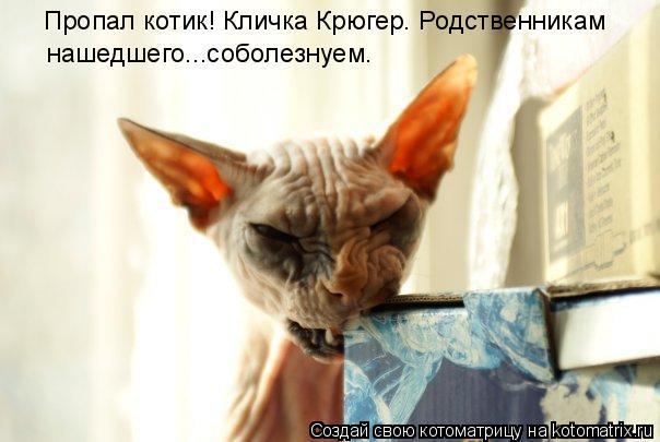 Котоматрица: Пропал котик! Кличка Крюгер. Родственникам  нашедшего...соболезнуем.