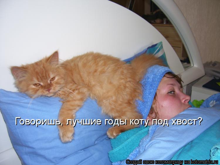 Котоматрица: Говоришь, лучшие годы коту под хвост?