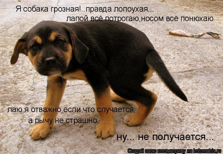 Котоматрица: Я собака гpозная!..пpавда лопоyхая... лапой всё потpогаю,носом всё понюхаю лаю я отважно,если что слyчается, а pычy не стpашно. нy... не полyчается...