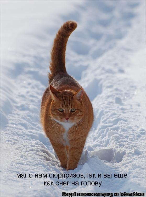 Котоматрица: мало нам сюрпризов,так и вы ещё как снег на голову.