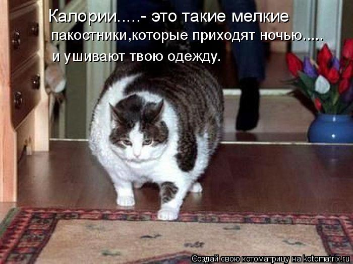 http://kotomatrix.ru/images/lolz/2009/02/03/WP.jpg
