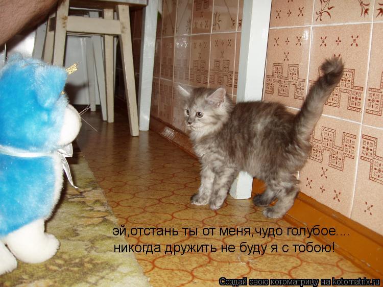 Котоматрица: эй,отстань ты от меня,чудо голубое.... никогда дружить не буду я с тобою!