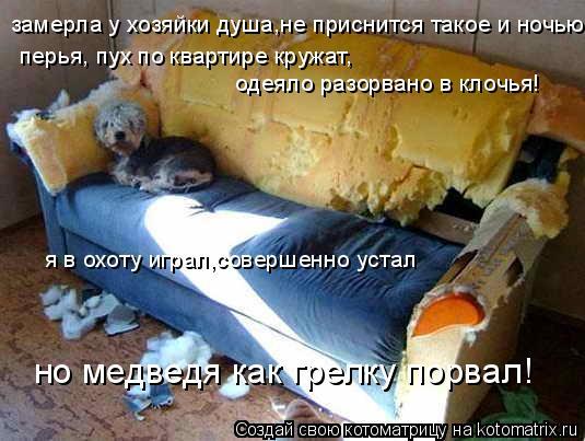 Котоматрица: замерла у хозяйки душа,не приснится такое и ночью перья, пух по квартире кружат, одеяло разорвано в клочья! но медведя как грелку порвал! я в