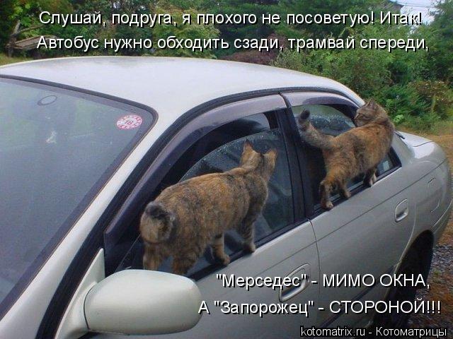 """Котоматрица: Слушай, подруга, я плохого не посоветую! Итак! """"Мерседес"""" - МИМО ОКНА,  А """"Запорожец"""" - СТОРОНОЙ!!! Автобус нужно обходить сзади, трамвай спереди,"""