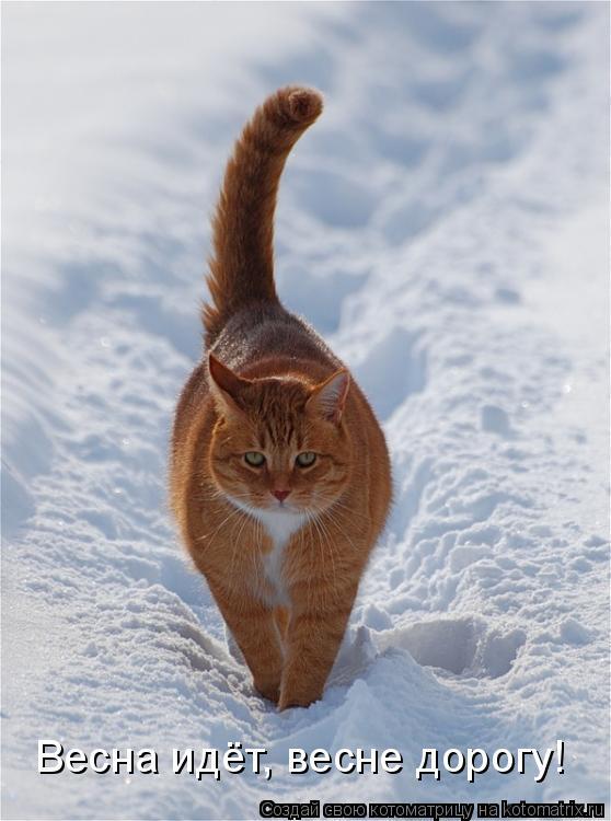 http://kotomatrix.ru/images/lolz/2009/02/03/jN.jpg