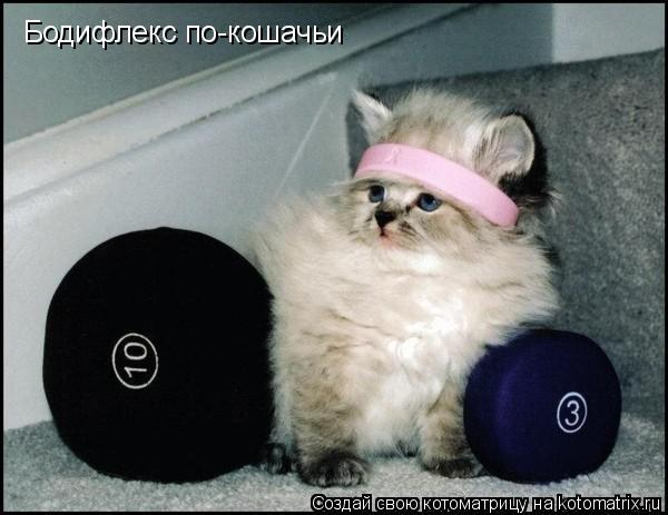 Котоматрица: Бодифлекс по-кошачьи