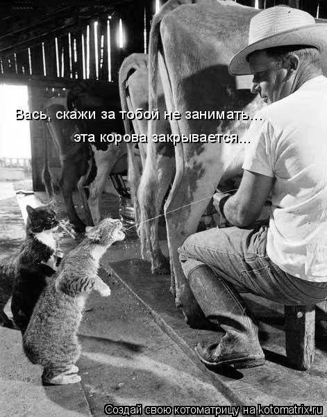 Котоматрица: Вась, скажи за тобой не занимать... эта корова закрывается...