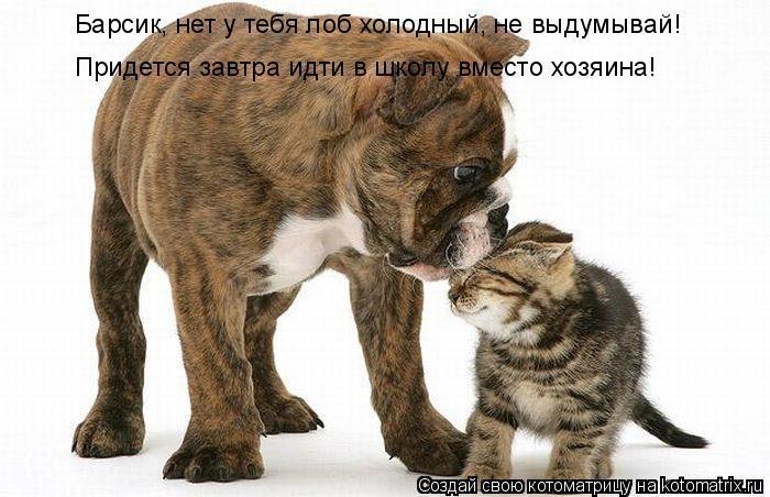 Котоматрица: Барсик, нет у тебя лоб холодный, не выдумывай! Придется завтра идти в школу вместо хозяина!