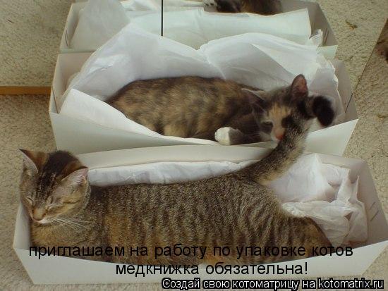 Котоматрица: приглашаем на работу по упаковке котов медкнижка обязательна!