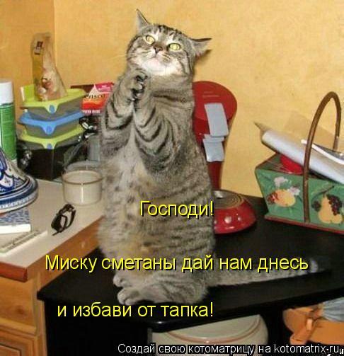 Котоматрица: Господи! Миску сметаны дай нам днесь и избави от тапка!