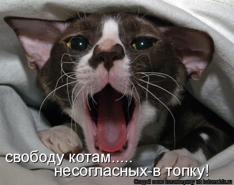 Котоматрица: свободу котам..... несогласных-в топку!