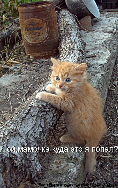 Котоматрица: ой,мамочка,куда это я попал?
