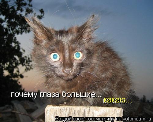 Котоматрица: почему глаза большие... какаю... какаю...
