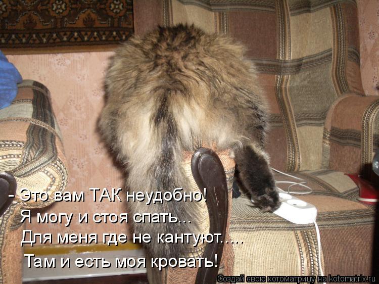 Котоматрица: - Это вам ТАК неудобно! Я могу и стоя спать... Для меня где не кантуют..... Там и есть моя кровать!