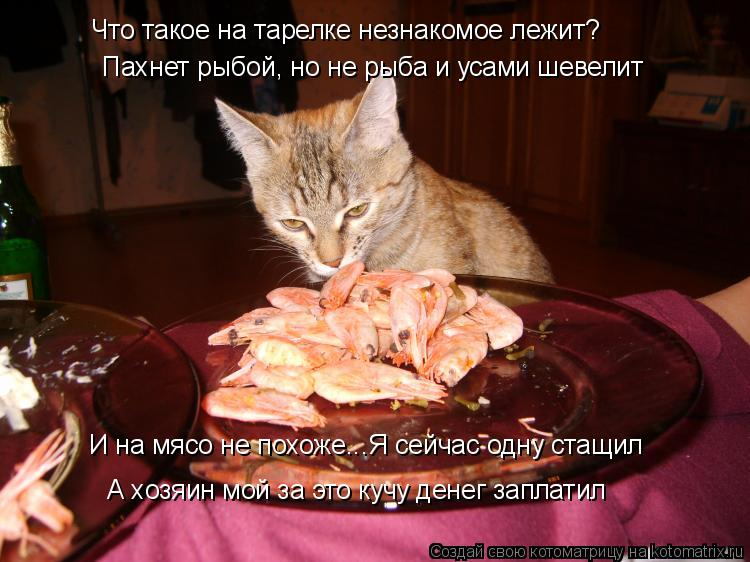 Котоматрица: Что такое на тарелке незнакомое лежит? Пахнет рыбой, но не рыба и усами шевелит И на мясо не похоже...Я сейчас одну стащил А хозяин мой за это