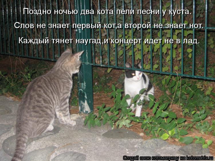 Котоматрица: Поздно ночью два кота пели песни у куста. Слов не знает первый кот,а второй не знает нот. Каждый тянет наугад,и концерт идет не в лад.