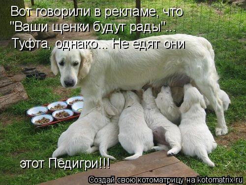 """Котоматрица: Вот говорили в рекламе, что """"Ваши щенки будут рады""""... Туфта, однако... Не едят они  этот Педигри!!!"""