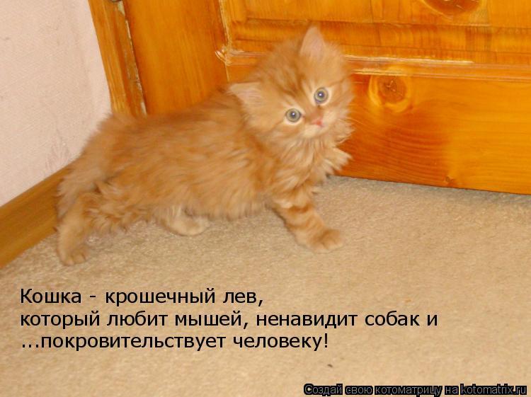 Котоматрица: Кошка - крошечный лев,  который любит мышей, ненавидит собак и  ...покровительствует человеку!