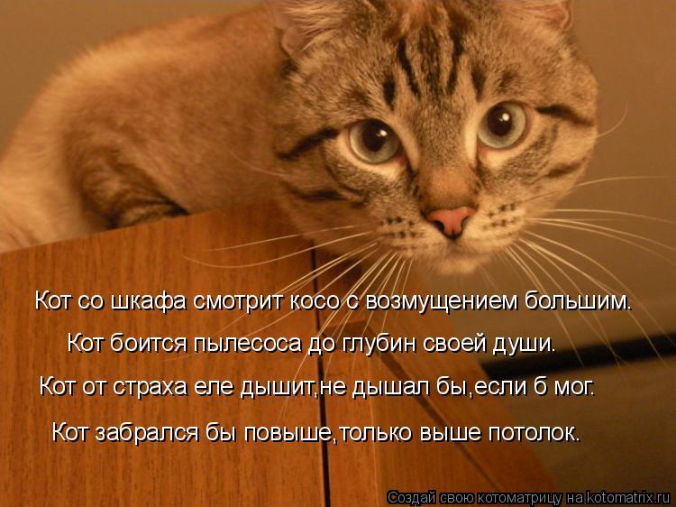 Кот и пылесос страха нет