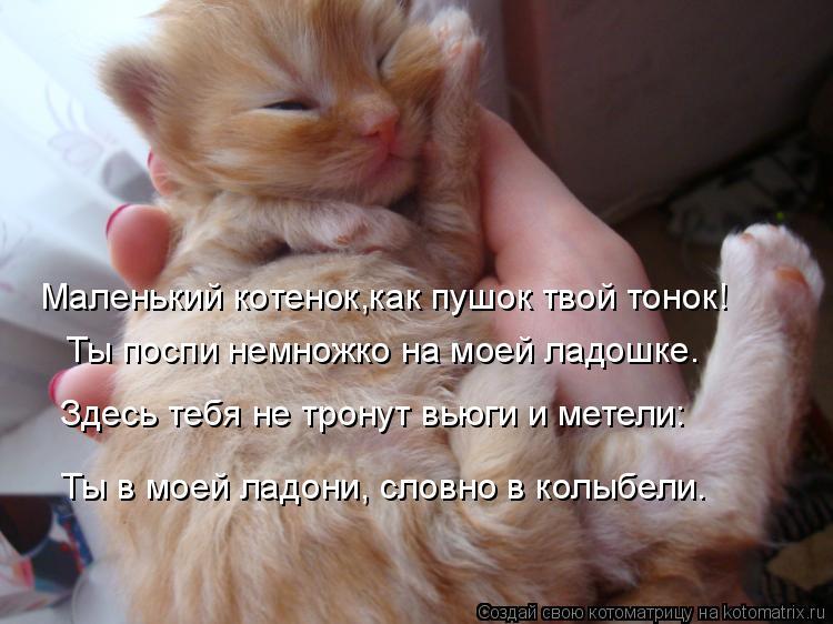 Котоматрица: Маленький котенок,как пушок твой тонок! Ты поспи немножко на моей ладошке. Здесь тебя не тронут вьюги и метели: Ты в моей ладони, словно в кол