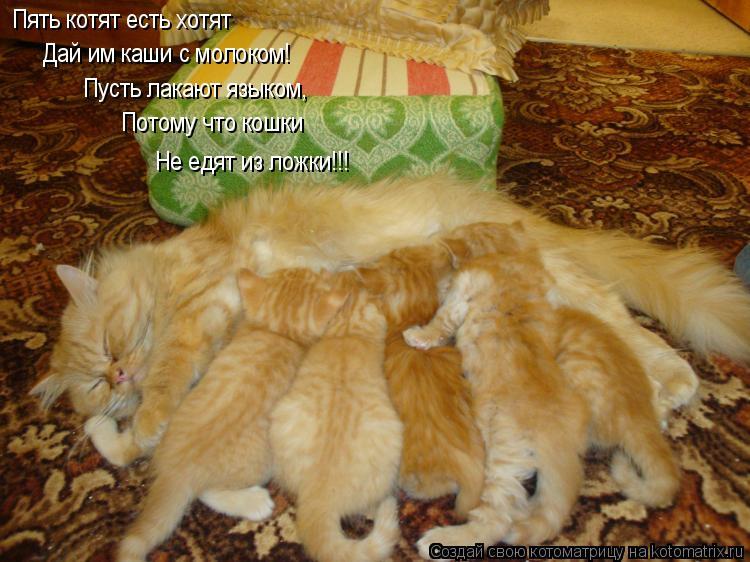 Котоматрица: Пять котят есть хотят Дай им каши с молоком! Пусть лакают языком, Потому что кошки Не едят из ложки!!!