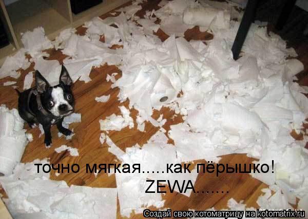 Котоматрица: точно мягкая.....как пёрышко! ZEWA.......