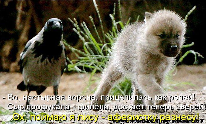 Котоматрица: - Во, настырная ворона, прицепилась как репей! Сыр профукала - филёна, достаёт теперь зверей! Ох, поймаю я лису - аферистку разнесу!