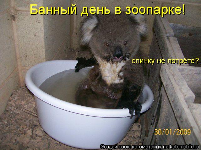 Котоматрица: Банный день в зоопарке! спинку не потрёте?
