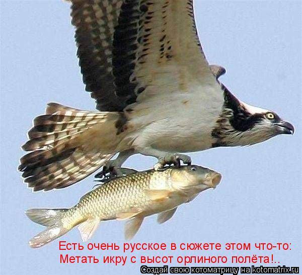 Котоматрица: Есть очень русское в сюжете этом что-то: Метать икру с высот орлиного полёта!..
