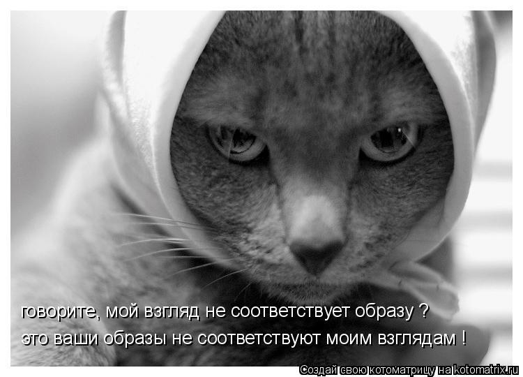 Котоматрица: говорите, мой взгляд не соответствует образу ? это ваши образы не соответствуют моим взглядам !