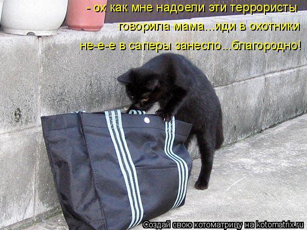 Котоматрица: - ох как мне надоели эти террористы говорила мама...иди в охотники не-е-е в саперы занесло...благородно!