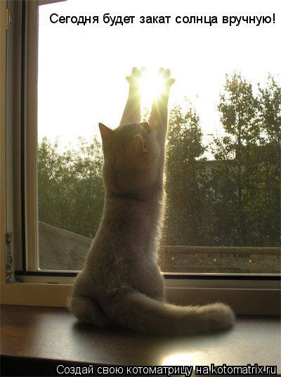 Котоматрица: Сегодня будет закат солнца вручную!