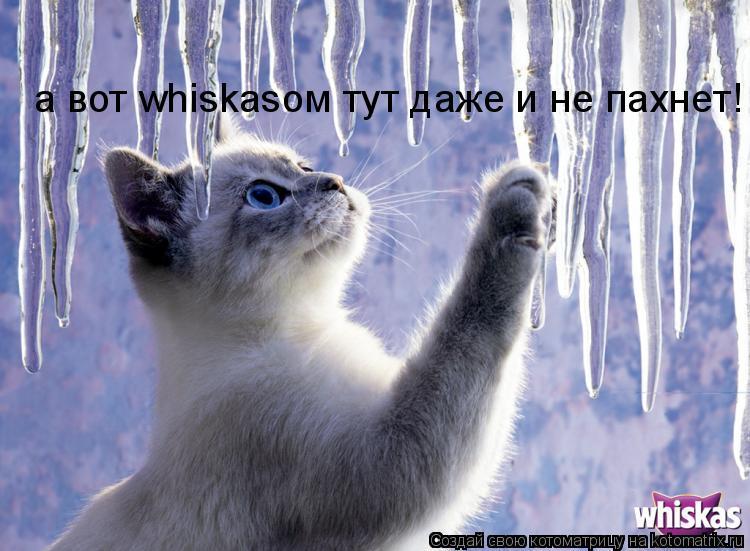 Котоматрица: а вот whiskasом тут даже и не пахнет!