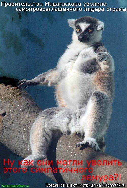 Котоматрица: Правительство Мадагаскара уволило  самопровозглашенного лидера страны. Ну как они могли уволить  этого симпатичного  лемура?!
