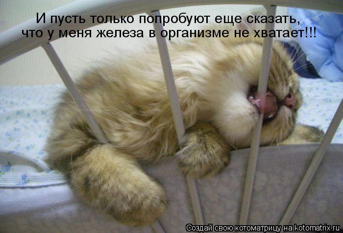 Железа в крови кот